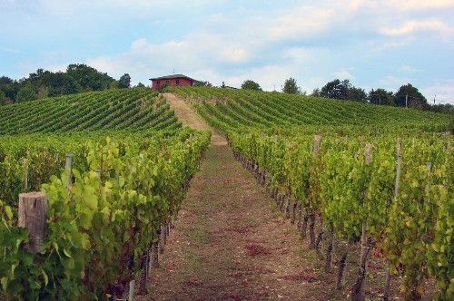 Taurasi: Italy's Unsung Great Red Wine