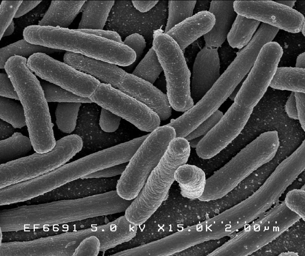 Microbes In The Gut Are Protective Against Radiation Damage
