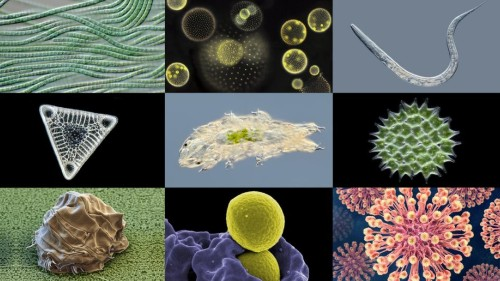 Microbes Are Crawling All Over Your Body And In A New Amsterdam Museum