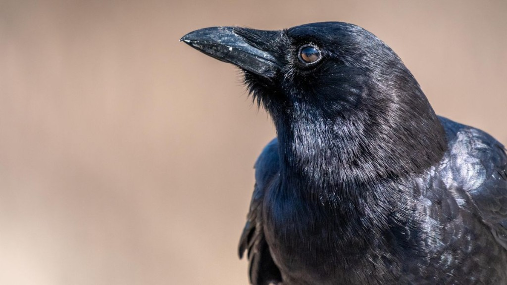 Do Birds Have A Subjective Reality? A New Experiment Suggests So
