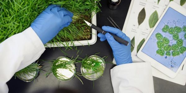 Regulatory Landscape Brightens For Ag Biotechs