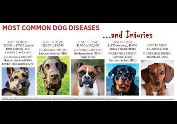 5 Top Doggie Diseases and Injuries