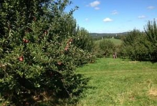 Going Apple Picking? For Two Of New York's Best Orchards, Now's The Time
