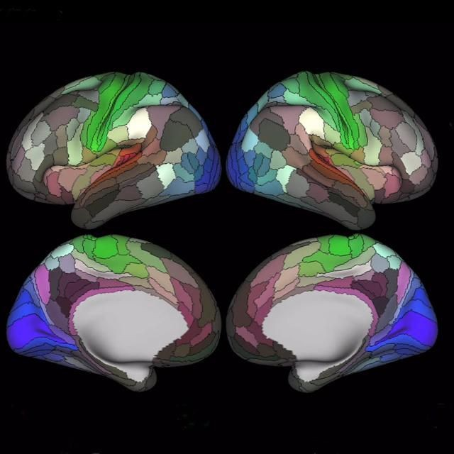 A New Map Of The Brain That Is Unlike Anything You Have Seen Before