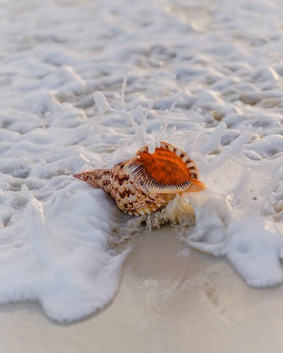 As The Oceans Become More Acidic, Sea Snail Shells Could Dissolve