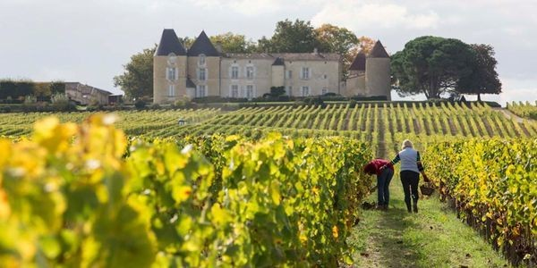 Summer In Bordeaux: The Châteaux To Visit In Sauternes