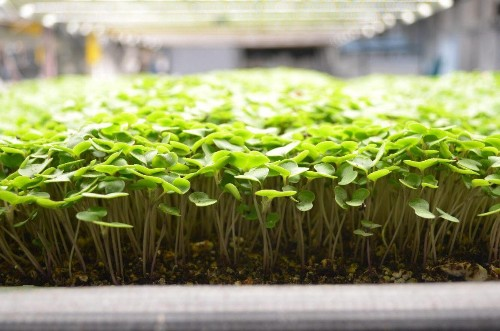 Edenworks Touts Results From Growing With Ecology Instead Of Chemicals