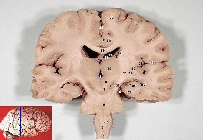Brain's Consciousness 'Sleep Switch' Found By Accident?