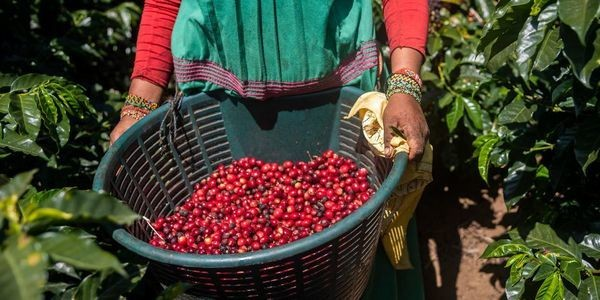 Forced Labor In Global Coffee Industry – Setting Minimum Price Alone Will Not Solve The Problem