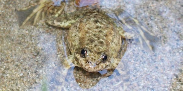Conservationists Fight To Save Critically Endangered Amphibians As Trump Guts Endangered Species Act