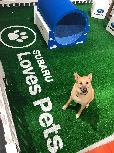Subaru Still Leads Auto Brands That Are Going To The Dogs -- Literally