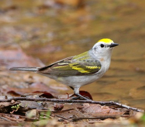 Scientists Discover A Rare Bird That's A Hybrid Of Three Different Species