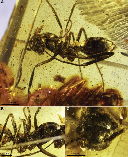 The Six Most Incredible Fossils Preserved In Amber