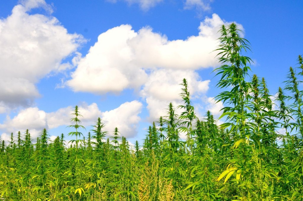 There's Still A Reason To Be Hyped About Industrial Hemp