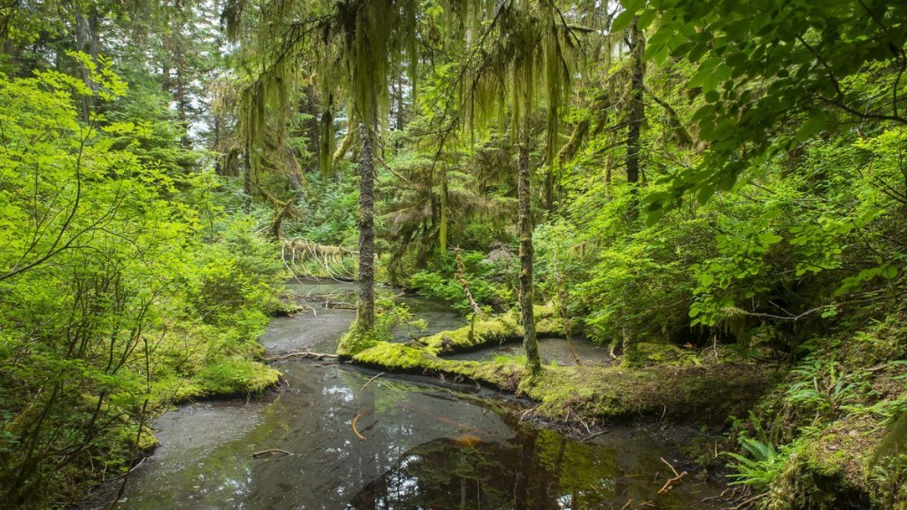 Trump Authorizes Logging In Alaskan National Forest Less Than Two Weeks After Signing Trillion Trees Initiative