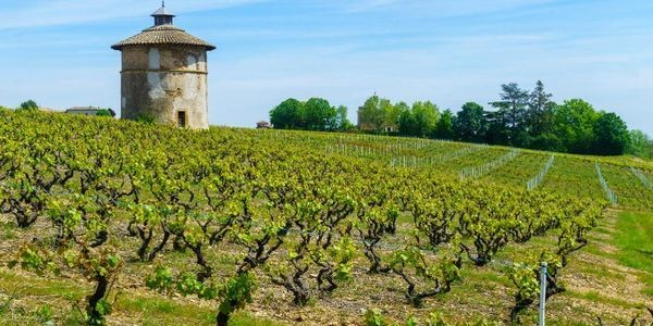 Exploring Beaujolais Crus With Les Vins Duboeuf
