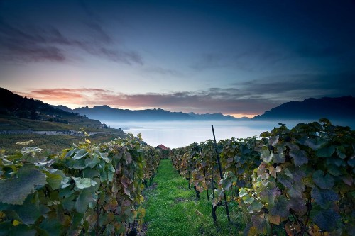 The World's Most Beautiful Wine Region: Switzerland's Lavaux
