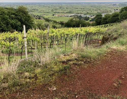 What One Writer Has Been Learning About Volcanic Wines