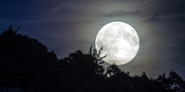 This One Species Of Animal Proves That The Moon Can Affect Biological Evolution