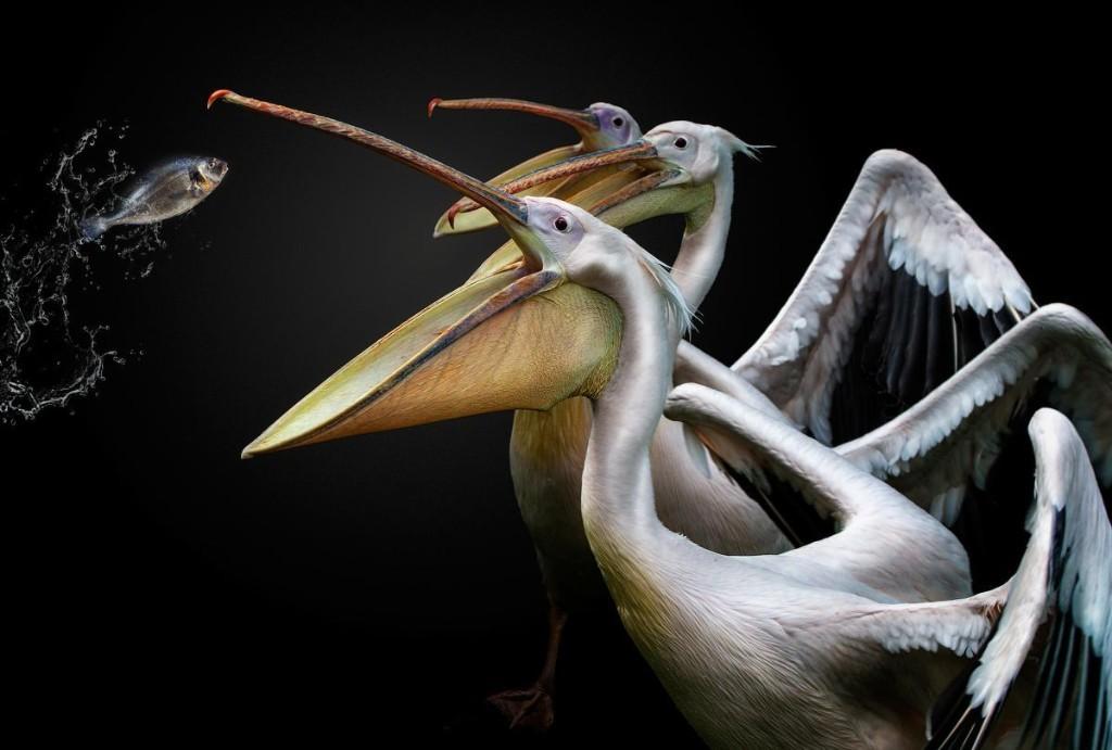 Bird Lovers: 12 Stunning Bird-Photographer-Of-The-Year 2019 Finalists