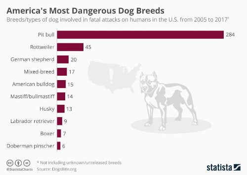 America's Most Dangerous Dog Breeds [Infographic]