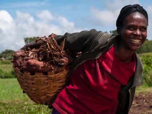 Entrepreneurship And The Agri-Food Opportunity
