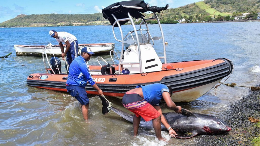 Five Glaring Issues With The Oil Spill Response In Mauritius Today
