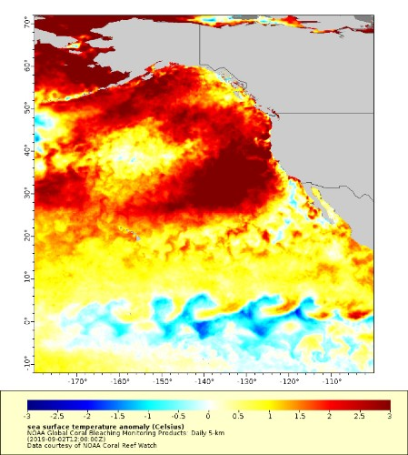There's A Record Breaking Marine Heatwave Off The Coast Of California