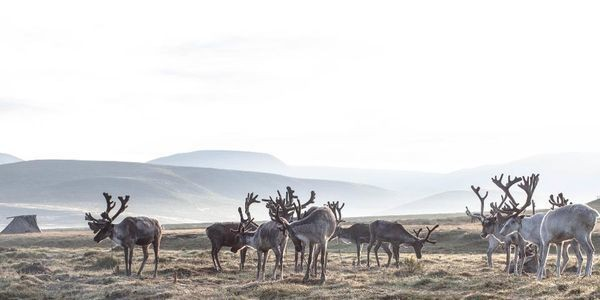 22 Photos That Prove Life With Mongolia's Tsaatan Tribe Is Magical