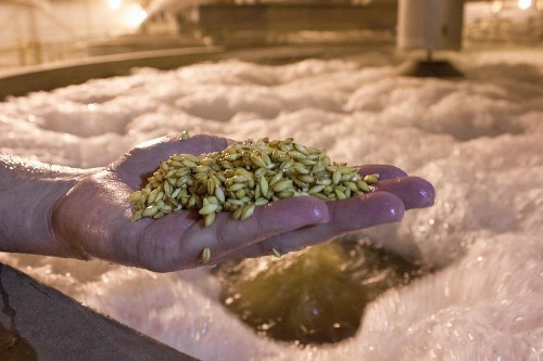In Race Against Climate Change, Innovations To This Ingredient Could Determine The Future of Brewing
