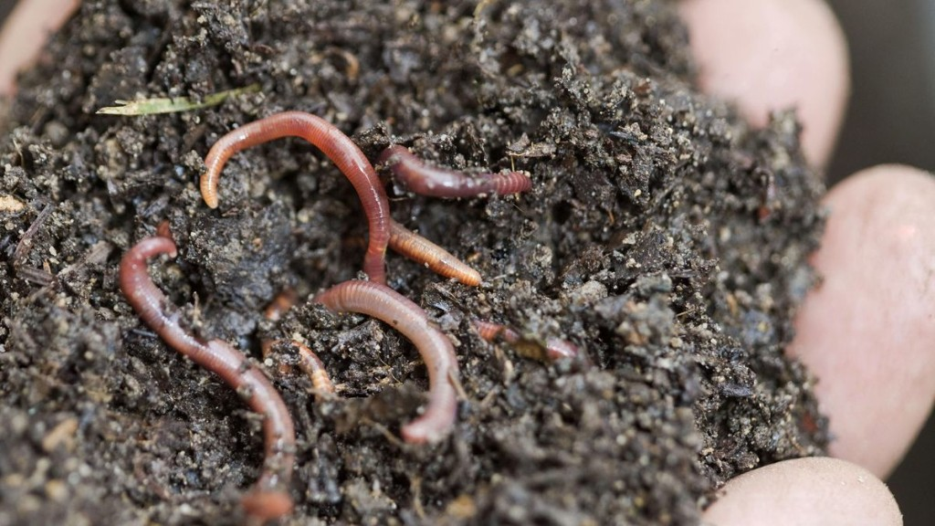 Some Tips To Start Composting From A Climate Scientist's Personal Journey