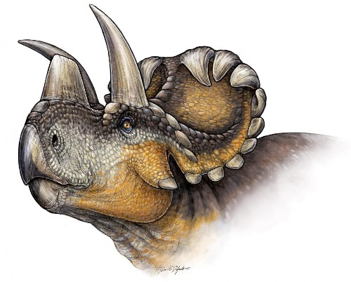 This New Species Of Horned Dinosaur Provides Hints About Its Evolution