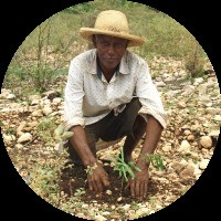 Why Is Timberland Planting Trees In Haiti?