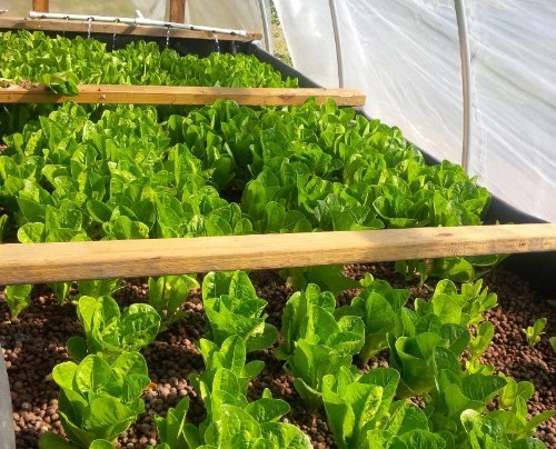 USDA To Weigh In On Whether Organic Farming Means Using Soil