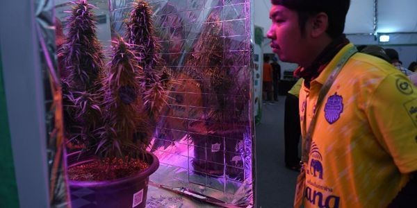 Thailand Will Soon Allow Its Citizens To Grow Cannabis At Home To Sell To The Government.