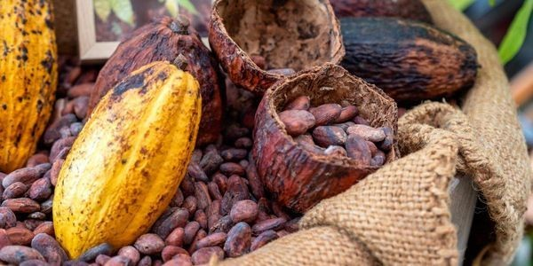 Cacao Capital: Davao's Emerging Artisan Chocolate Industry