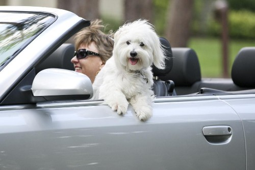 The Dangers Of Driving In Cars With Dogs