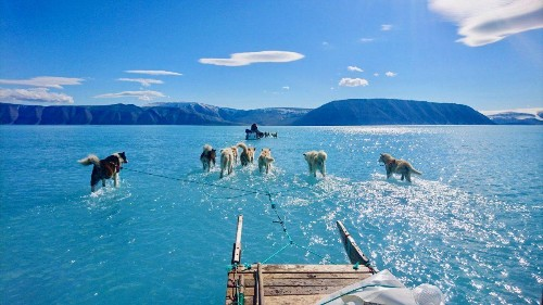 Surreal Image Of A Melting Greenland: Sled Dogs Mushing Through Endless Water