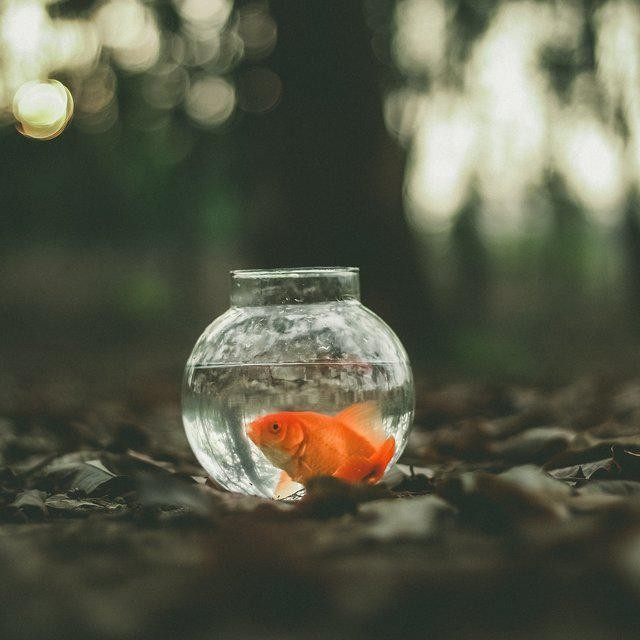 If You Want To Achieve Extreme Productivity, Don't Be A Goldfish