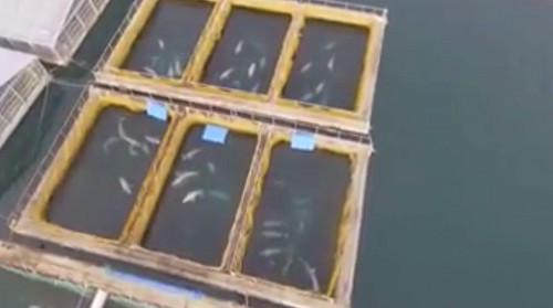 100 Whales Found Captured In Russian Bay: Shipped To Chinese Marine Parks