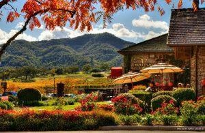 You Can Have A Perfect Napa Valley Visit Just In Yountville