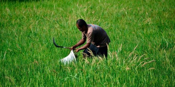 Nine Critical Technologies For Feeding The World Without Destroying It