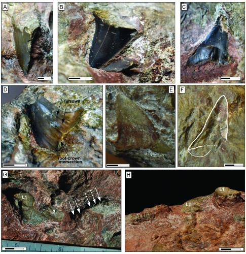 Scientists Uncover Shark Fossil Secrets In Italy