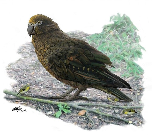 Meet Squawkzilla, The Giant Parrot Just Discovered On New Zealand