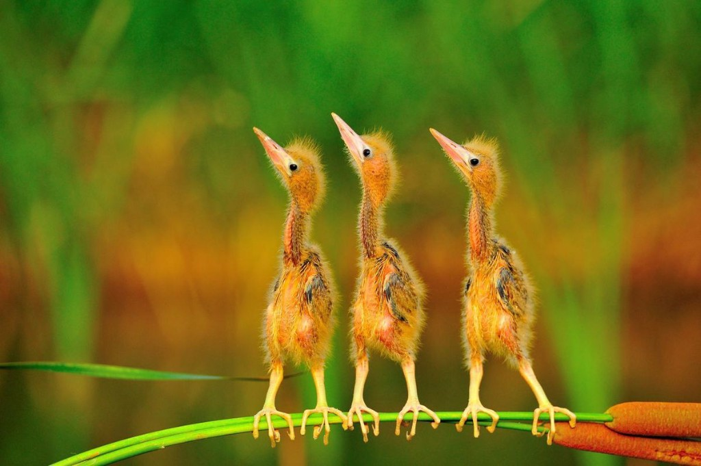 Amazing Birds: 20 Shortlisted Images Competing For Bird Photographer Of The Year 2020