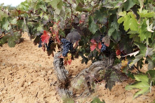 After Many Years Of Selling Their Grapes To Top Producers, A Family Decided To Make Their Own Wine