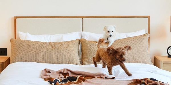 The Best Dog-Friendly Hotels And Destinations In America