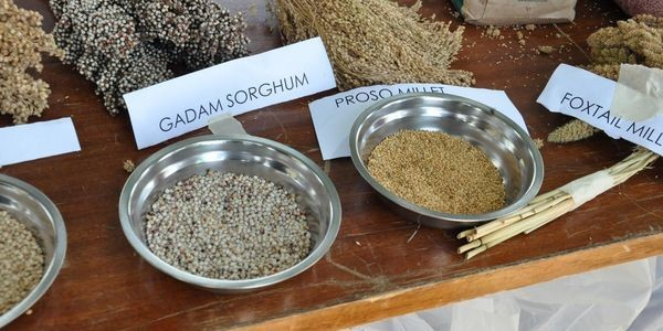 Traditional Foods Make A Comeback