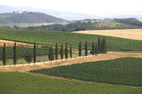 Brunello Di Montalcino: Thoughts On One Of Italy's Greatest Red Wines