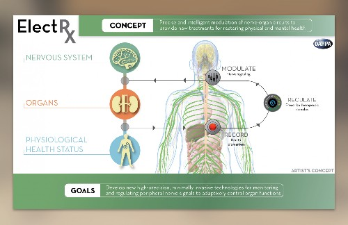 DARPA's ElectRx Project: Self-Healing Bodies Through Targeted Stimulation Of The Nerves